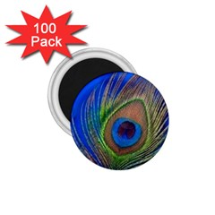 Blue Peacock Feather 1 75  Magnets (100 Pack)