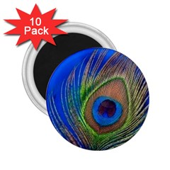 Blue Peacock Feather 2 25  Magnets (10 Pack)
