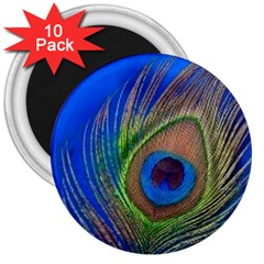 Blue Peacock Feather 3  Magnets (10 pack)