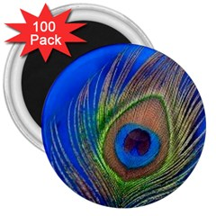 Blue Peacock Feather 3  Magnets (100 Pack)