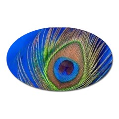 Blue Peacock Feather Oval Magnet