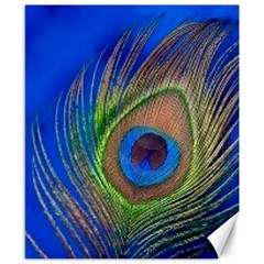 Blue Peacock Feather Canvas 8  x 10