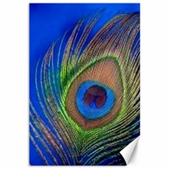 Blue Peacock Feather Canvas 12  X 18