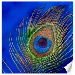 Blue Peacock Feather Canvas 16  x 16