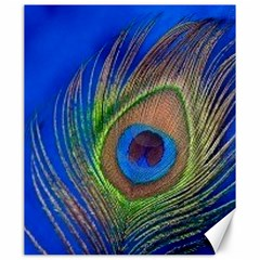 Blue Peacock Feather Canvas 20  X 24