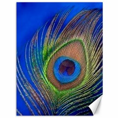 Blue Peacock Feather Canvas 36  x 48