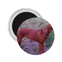 Redbone Coonhound Full 2.25  Magnets