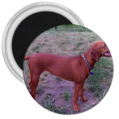 Redbone Coonhound Full 3  Magnets