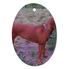 Redbone Coonhound Full Ornament (Oval)