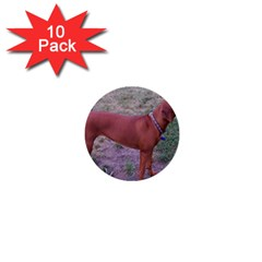 Redbone Coonhound Full 1  Mini Buttons (10 pack)