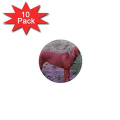 Redbone Coonhound Full 1  Mini Magnet (10 pack)