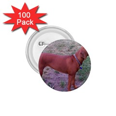 Redbone Coonhound Full 1.75  Buttons (100 pack)