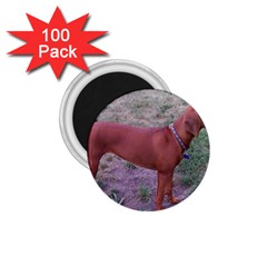Redbone Coonhound Full 1.75  Magnets (100 pack)