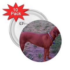 Redbone Coonhound Full 2.25  Buttons (10 pack)