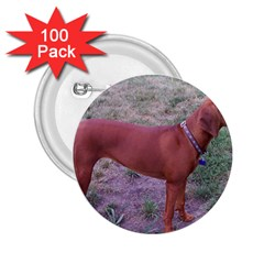 Redbone Coonhound Full 2.25  Buttons (100 pack)