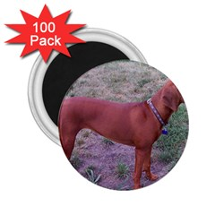 Redbone Coonhound Full 2.25  Magnets (100 pack)