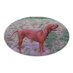 Redbone Coonhound Full Oval Magnet