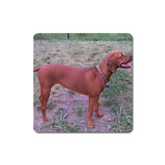 Redbone Coonhound Full Square Magnet