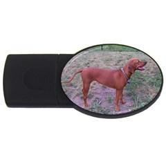 Redbone Coonhound Full USB Flash Drive Oval (4 GB)