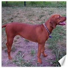 Redbone Coonhound Full Canvas 12  x 12