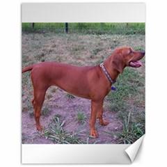 Redbone Coonhound Full Canvas 12  x 16