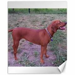 Redbone Coonhound Full Canvas 16  x 20