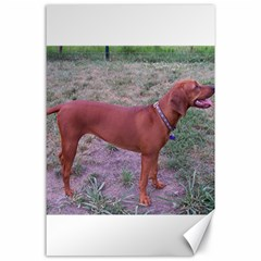 Redbone Coonhound Full Canvas 24  x 36