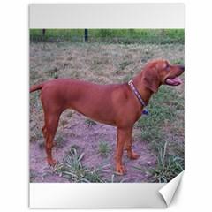 Redbone Coonhound Full Canvas 36  x 48