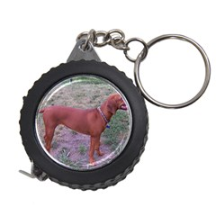 Redbone Coonhound Full Measuring Tapes
