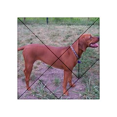 Redbone Coonhound Full Acrylic Tangram Puzzle (4  x 4 )