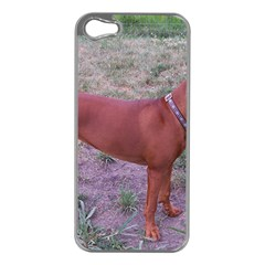 Redbone Coonhound Full Apple iPhone 5 Case (Silver)