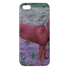 Redbone Coonhound Full Apple iPhone 5 Premium Hardshell Case
