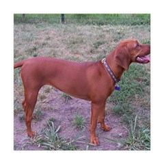 Redbone Coonhound Full Square Tapestry (Large)