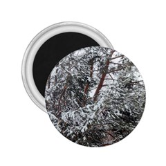 Winter Fall Trees 2.25  Magnets