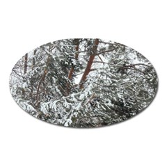 Winter Fall Trees Oval Magnet