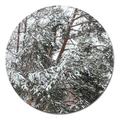Winter Fall Trees Magnet 5  (Round)