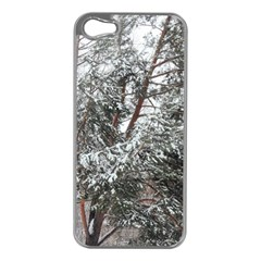 Winter Fall Trees Apple iPhone 5 Case (Silver)
