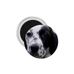 English Setter 1.75  Magnets