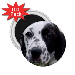 English Setter 2.25  Magnets (100 pack)