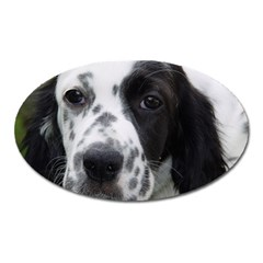 English Setter Oval Magnet
