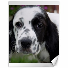English Setter Canvas 12  x 16