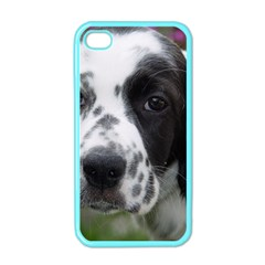 English Setter Apple iPhone 4 Case (Color)
