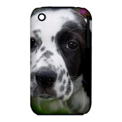 English Setter iPhone 3S/3GS