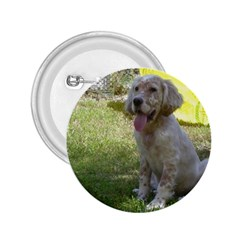 English Setter Orange Belton Puppy 2.25  Buttons