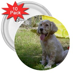 English Setter Orange Belton Puppy 3  Buttons (10 pack)