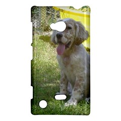 English Setter Orange Belton Puppy Nokia Lumia 720