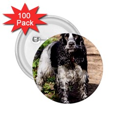 Black Roan English Cocker Spaniel 2.25  Buttons (100 pack)