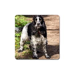 Black Roan English Cocker Spaniel Square Magnet