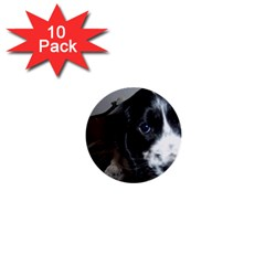 Black Roan English Cocker Spaniel Puppy 1  Mini Buttons (10 pack)