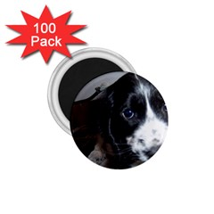 Black Roan English Cocker Spaniel Puppy 1.75  Magnets (100 pack)